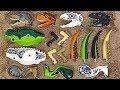 Lego Jurassic World! Find body that matches head of dinosaur! | DuDuPopTOY