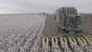 Wisdom Cotton Harvest