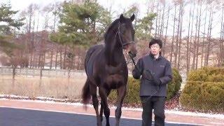 バゴ(Bago)-JBBA日本軽種馬協会2016