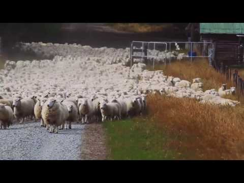 Australia's agriculture variety   Rogues Gallery