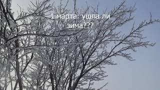 Как високосный год все в природе напутал. Весна или зима?