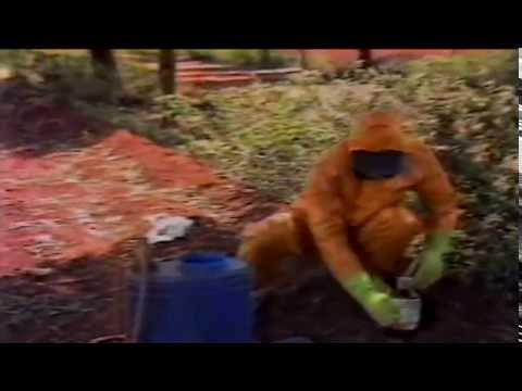 Cuidados no combate das pragas nas plantações - Programa Agricultura de Hoje - TV Manchete