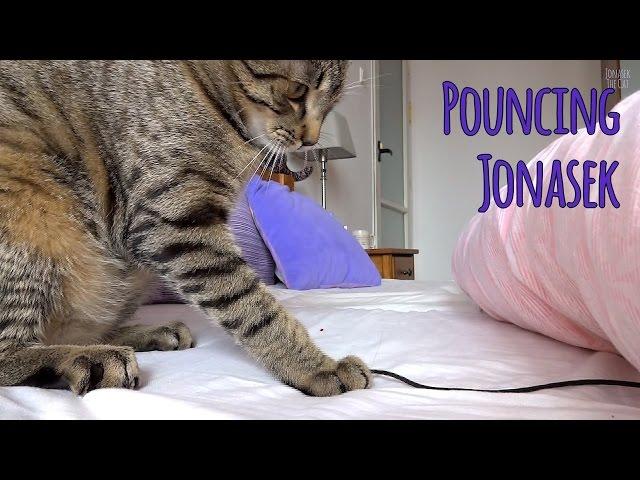 Kitten Jonasek pounces on a prey