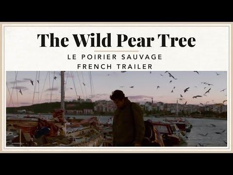 Le Poirier Sauvage (The Wild Pear Tree / Ahlat Ağacı) - French Trailer