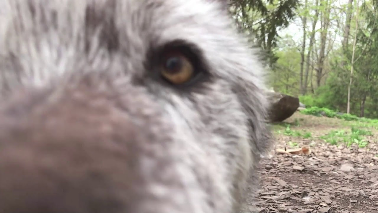 The Best Kisses Are Wolf Kisses