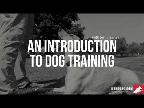 An Introduction to Dog Training I Self-Study Course