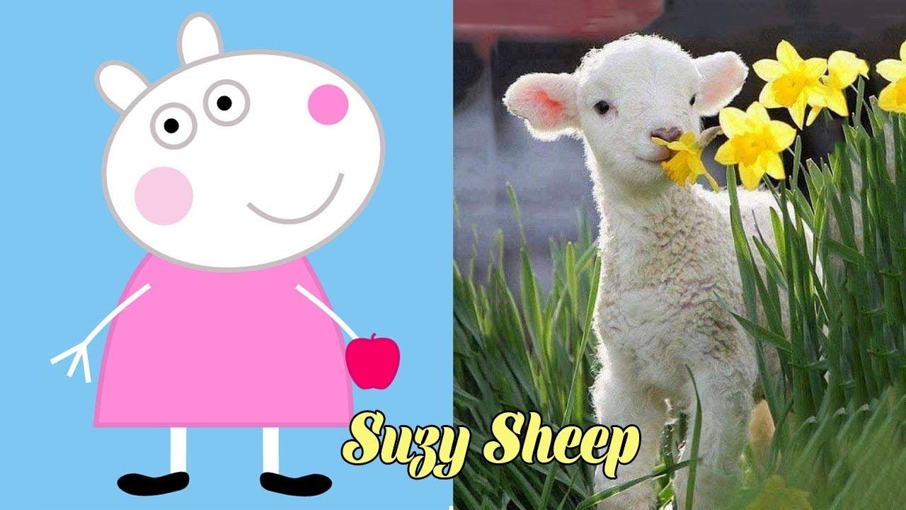 Peppa Pig Characters In Real Life Misa Cartoons