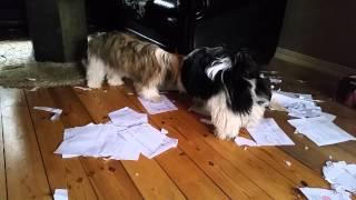 Mina hundar åt upp läxan...