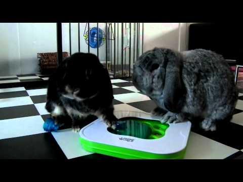 Max en Mini en hun voerspel