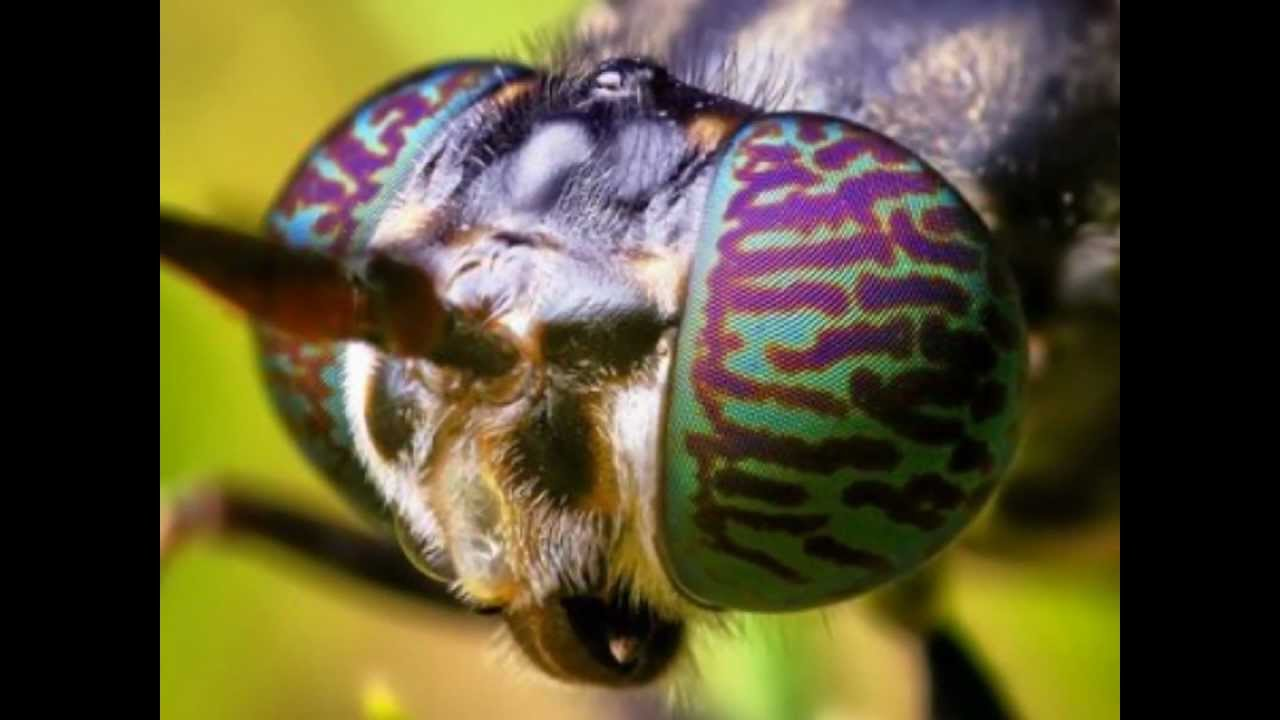Insects eyes - YouTube