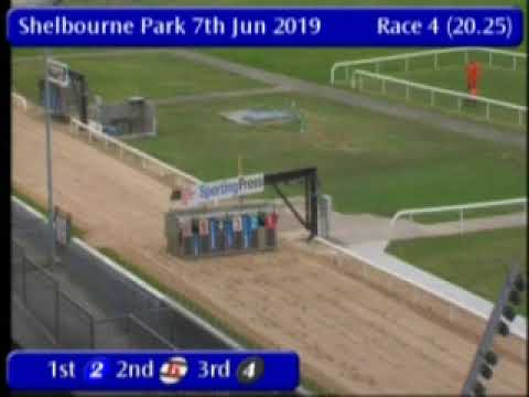 IGB - The Bet On The Tote A2  Semi-Final 07/06/2019 Race 4 - Shelbourne Park