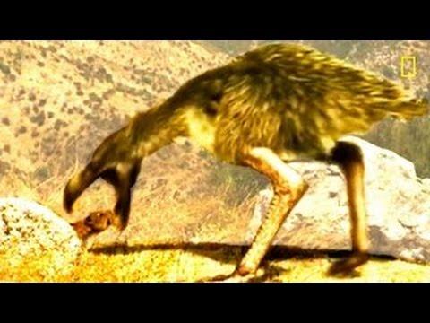 Dinosaurs Documentary - Prehistoric predators Killer pig National Geographic 2015