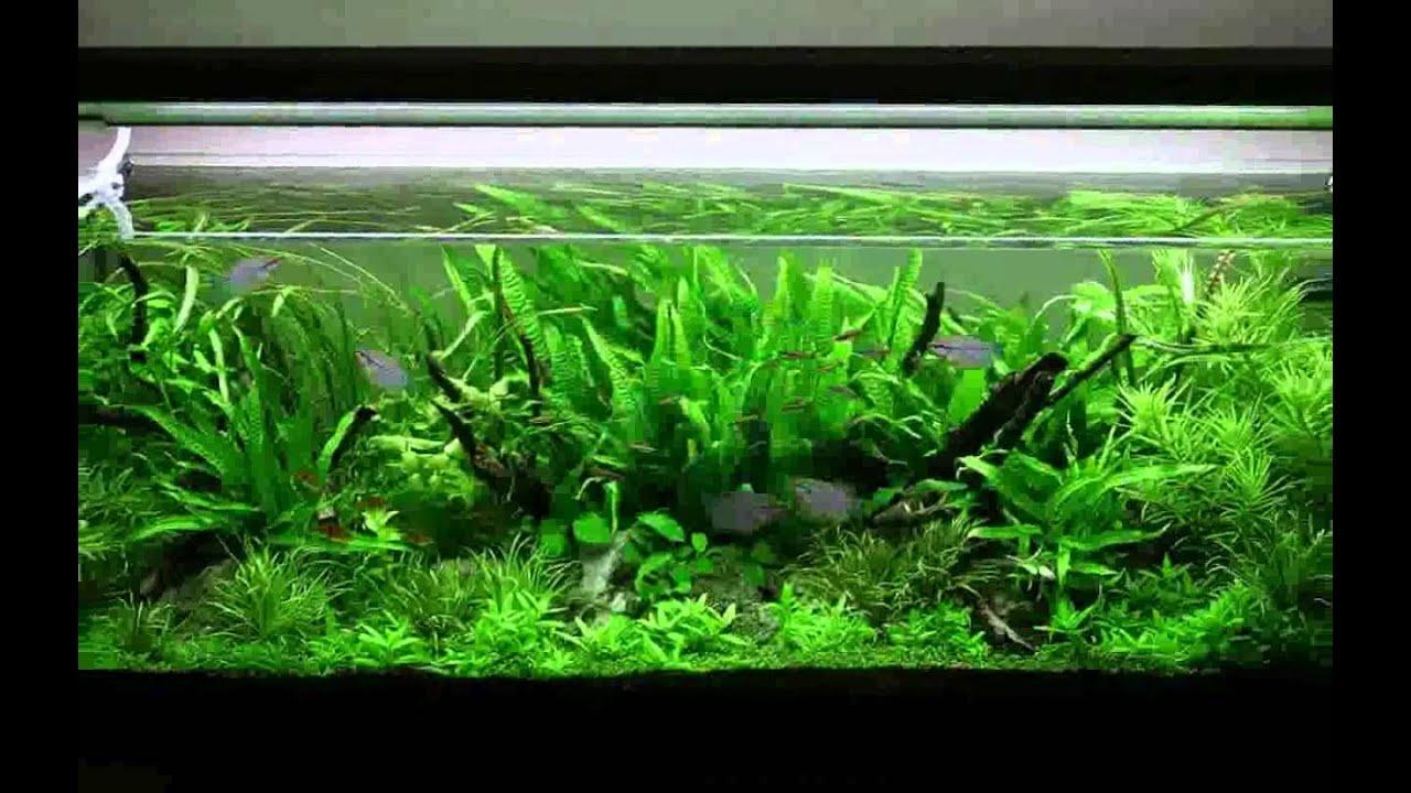 décoration aquarium amazon