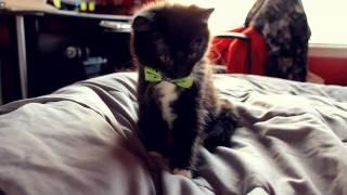 meet OREO my kitty