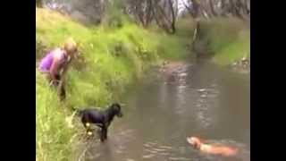 Dog Training In Maidstone Kent How To Stop Dog Aggression