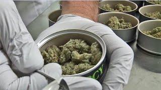 Cannabis in a Can Keeps Marijuana Fresher Longer