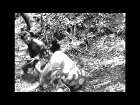 Trailer do filme Rashomon