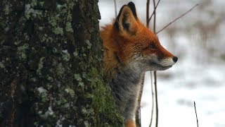 Обитатели елового леса  Миллион вопросов о природе
