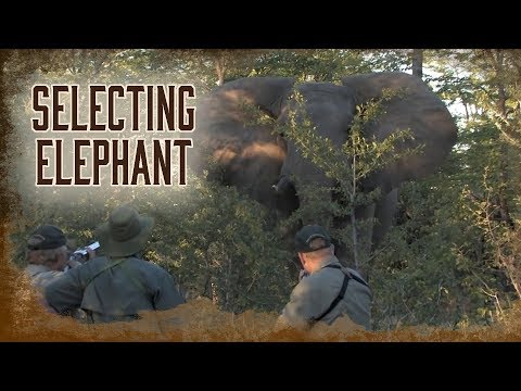 Selecting The Elephant To Harvest | 5