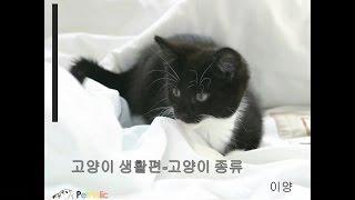 고양이 종류 - 제1부 -