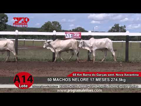 LOTE A14