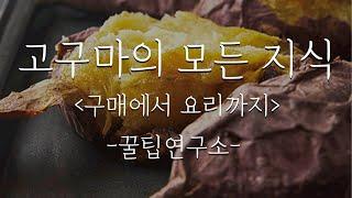 고구마의 모든 지식-구매에서 요리까지 ::sweet p…