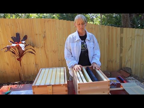 Beginner Beekeeping Ep 3 -  Setting Up Brood Box Frames