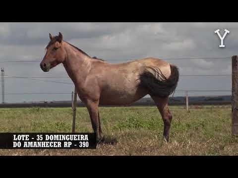 LOTE   35 DOMINGUEIRA DO AMANHECER RP   390