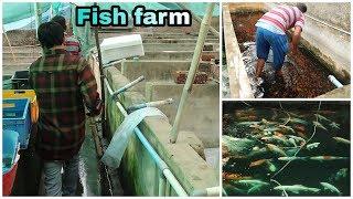 Chennai fish farm visit-kolathur fish wholesale -Abi Fish Room  - tamil - தமிழ்
