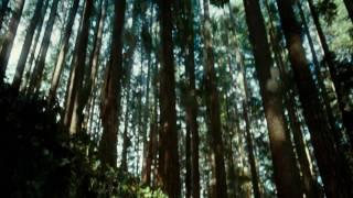 (HD) Hearing Damage Thom Yorke - VICTORIA_ECENA_LOBOS