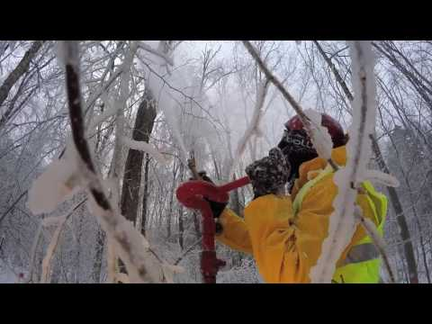 Hubbard Brook Ice Storm Experiment