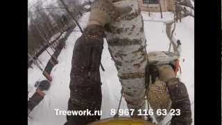 Удаления дерева.(Профессиональный уход за деревьями. Лечение, обработка от вредителей и болезней,обрезка и удаление деревье..., 2013-03-23T19:59:55.000Z)