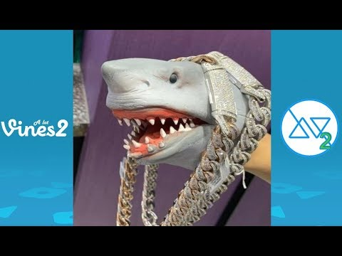 New Shark Puppet Instagram Videos Compilation February 2020 | Best Shark Puppet Videos (W/Tittles)