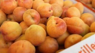 [Doku] Der Duft der Marille - Die sonnige Frucht der Wachau (HD)