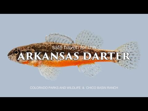 Arkansas Darter Conservation