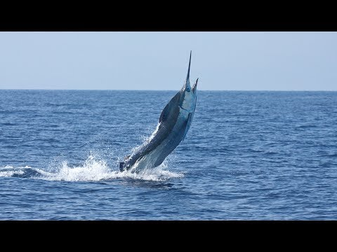 Hawaii - vlogg 13 - Filip får upp en fisk på 35 kilo
