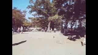サカナクション - Aoi