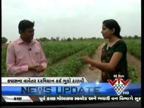 VTV - KHETI SPECIAL PROGRAM - WHAT TO KEEP THINGS FOCUSED ON THE COTTON PLANTATIONS