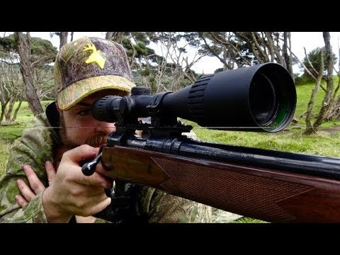 Hunting Fallow deer in New Zealand  # 28