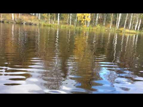 Как Медведи озеро переплывали (Октябрь 2017 - Карелия)