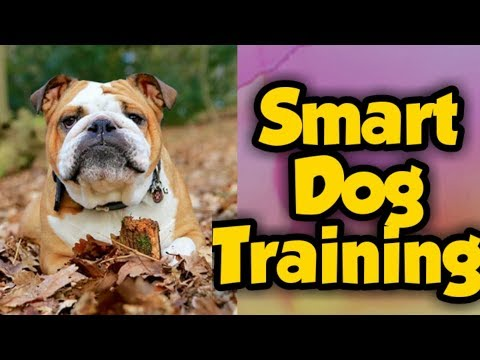 Best Dogs and Discipline Training [Best Intelligence Dogs Video] Part 4