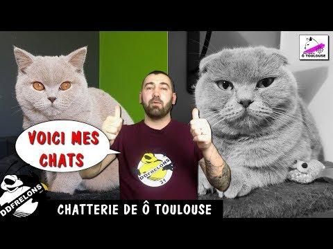 DD Frelons  Et Ses CHATS 😺 La Chatterie De Ô Toulouse