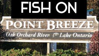 Oak Orchard River Salmon and Trout Fishing at Waterport dam Salmon Sunday November 1 2020