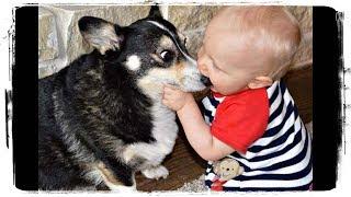 Дети и Животные - Это Любовь | Kids and Animals - This is Love #518