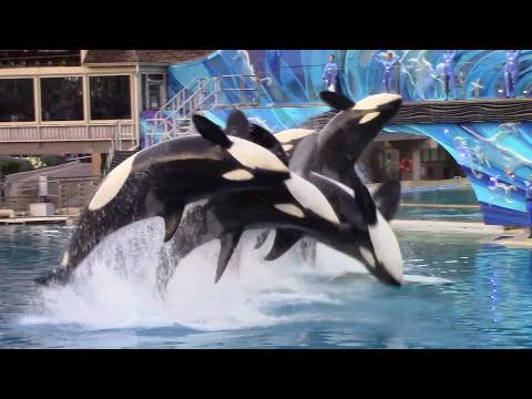 Last One Ocean (Full Show) at SeaWorld San Diego (1/8/17)