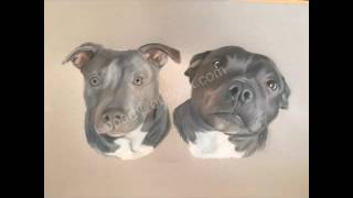 Katie foreman pet portraits animal art polychromos dogs horses boxer dog staffy Justin timberlake
