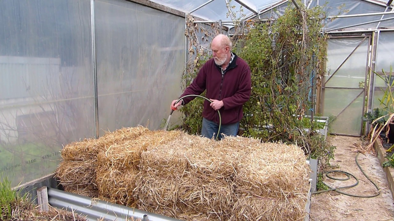 Creating An Organic Straw Bale Garden The Conditioning Process Youtube