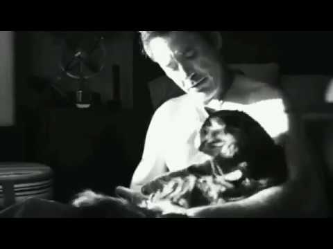 Robert Downey Jr. playing with his cats Montgomery and Dartanian