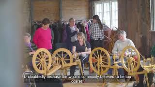 1st European Wool Day | Gammal Norsk Spelsau