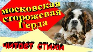 Собачья школа. Смешные собаки. Московская сторожевая читает стихи.